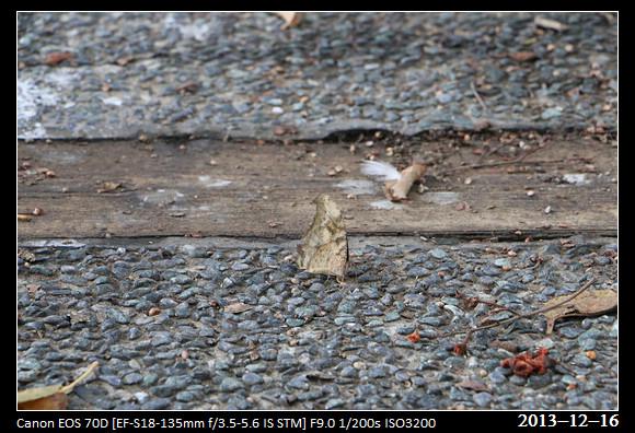 20131216_butterfly1