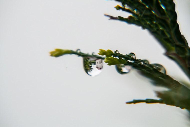 raindrops  1/7
