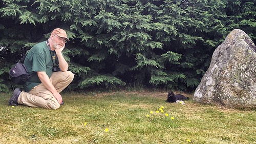 A cat may look at a Dave