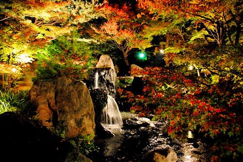 Shirotori Fall Lightup 094r