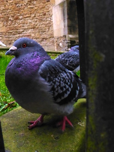 Pigeon by jonnyleestevens