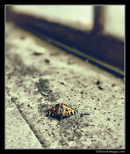 Butterfly No More by Dervish Images