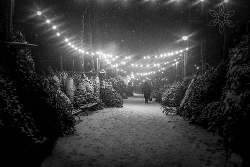Snow dreams by Everita