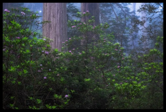 Silent - Damnation Creek - 2014