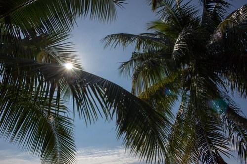 ヤシの木が南国気分を盛り上げる!