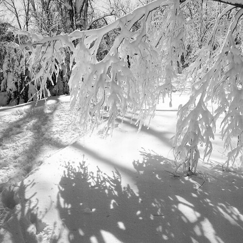 Snow in black and white