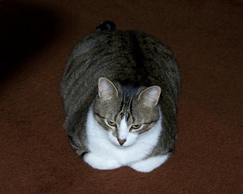 charlie kitty