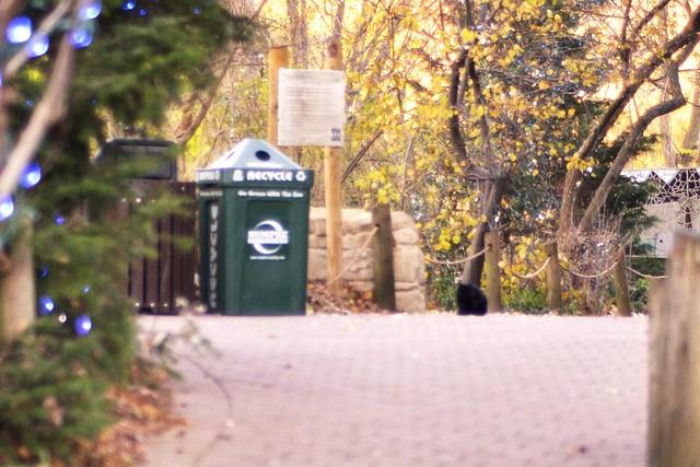 Stray at the Zoo