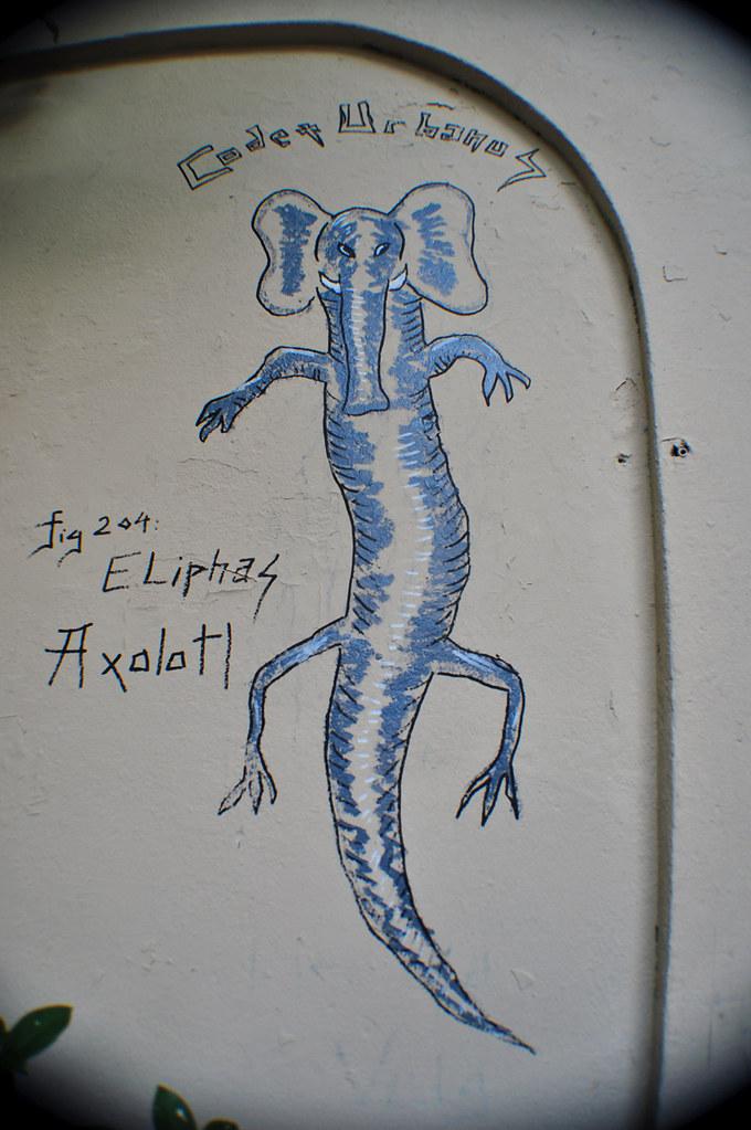 Fig.204 Eliphas Axolotl