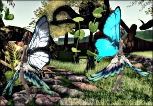 MNDp4.31 wings