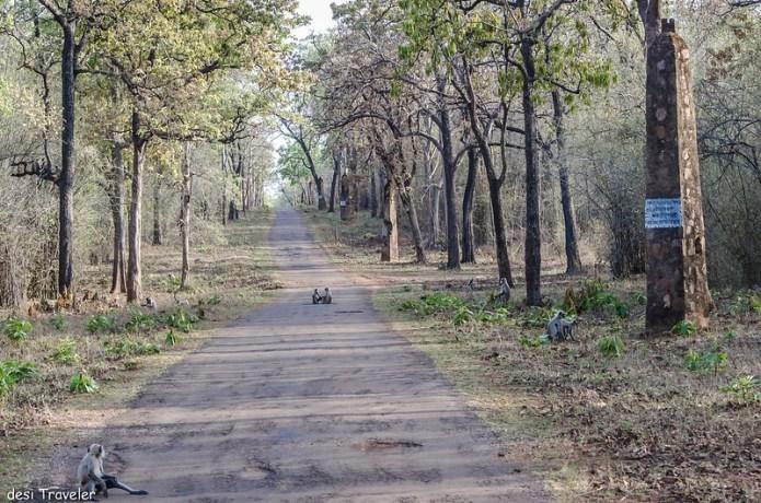 Pillars of Tadoba Tiger Reserve