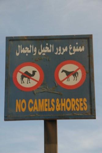 """""""No Camels & Horses"""" sign, Dahab, Egypt"""