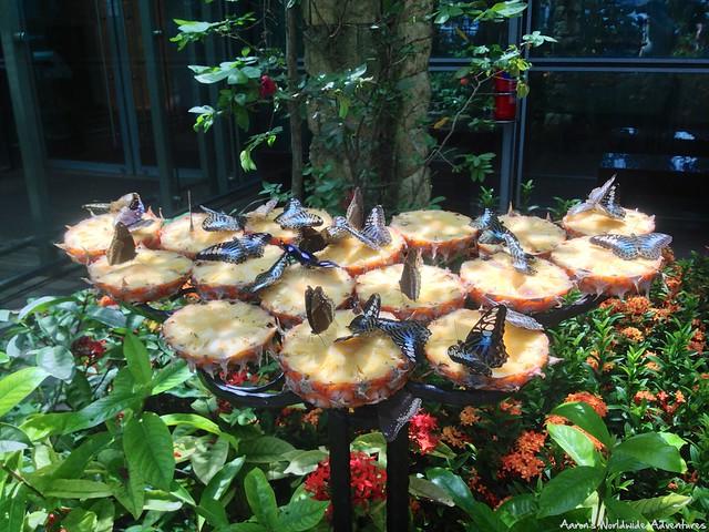 SIN Butterfly Garden