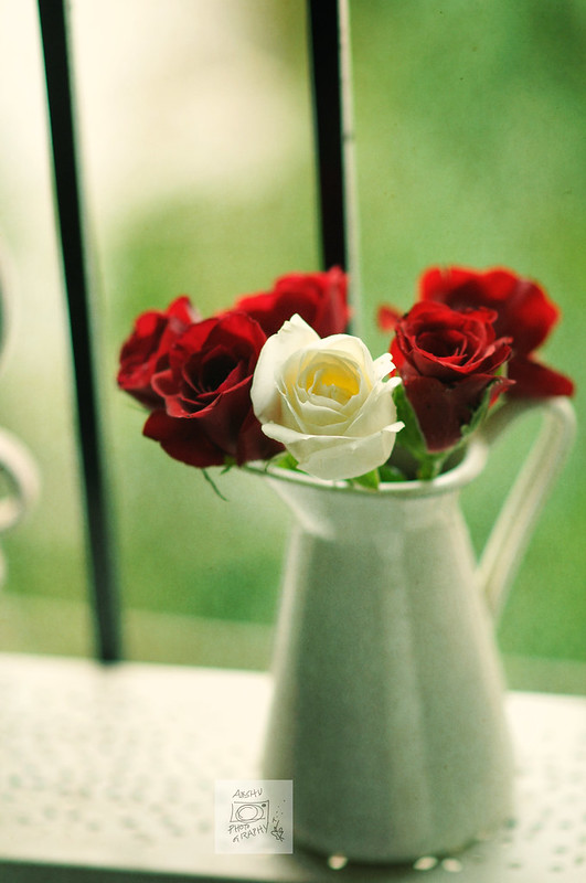 Day 205.365 – Roses (a week of  Still Life with Flowers  - III)