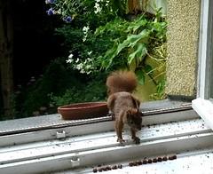 Eichhörnchen 3.6