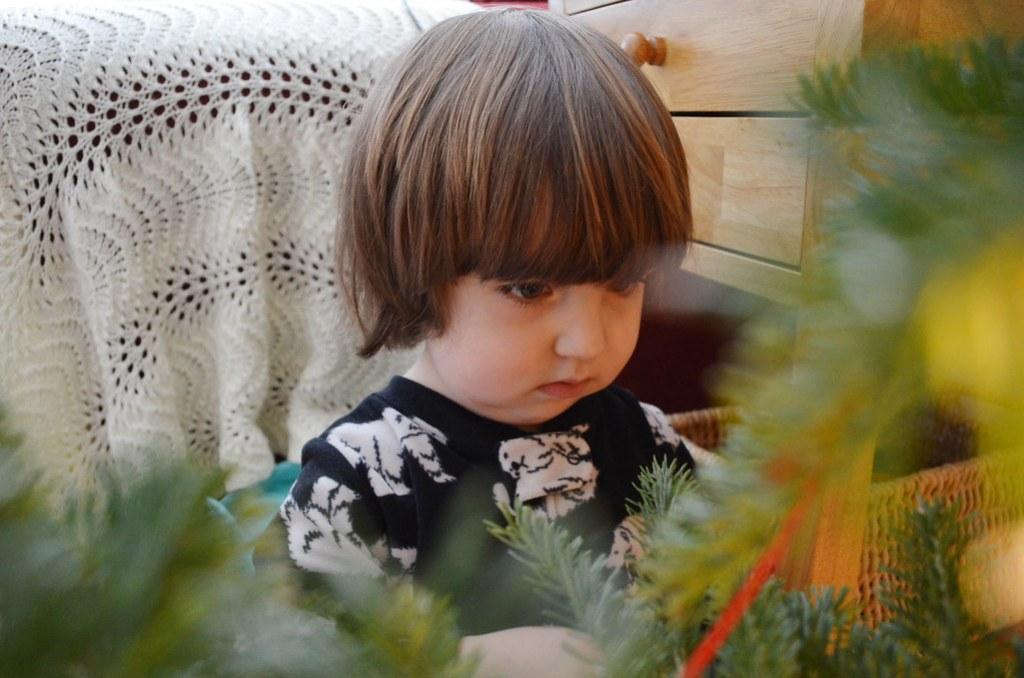 Zane through the tree