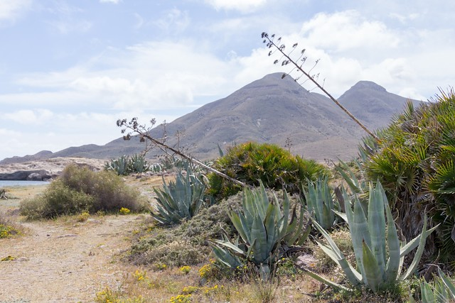 Path, agaves & mountains