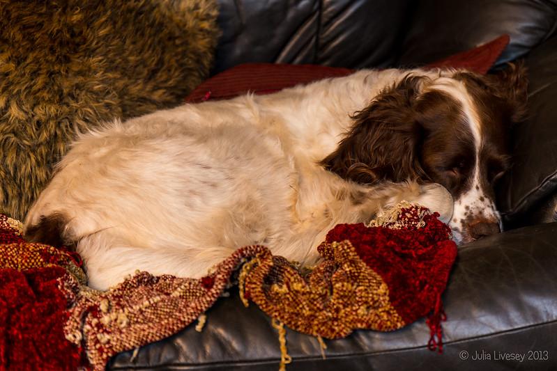 A snoozing Max
