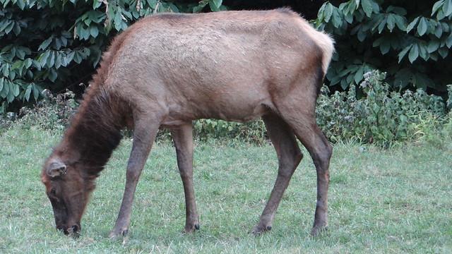 DSC06628 240813 Lone Elk Park