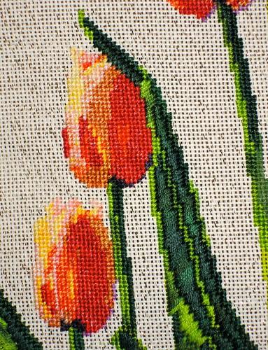 Tulips - Leaf Closeup by Carmen CS