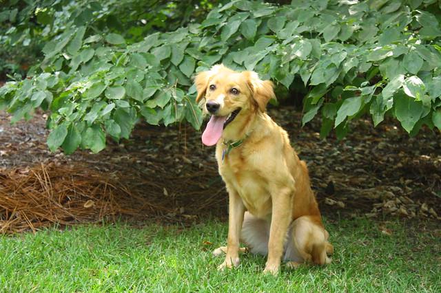 Georgia dog