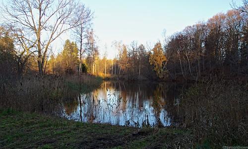 Lake in Bidstrup Skov