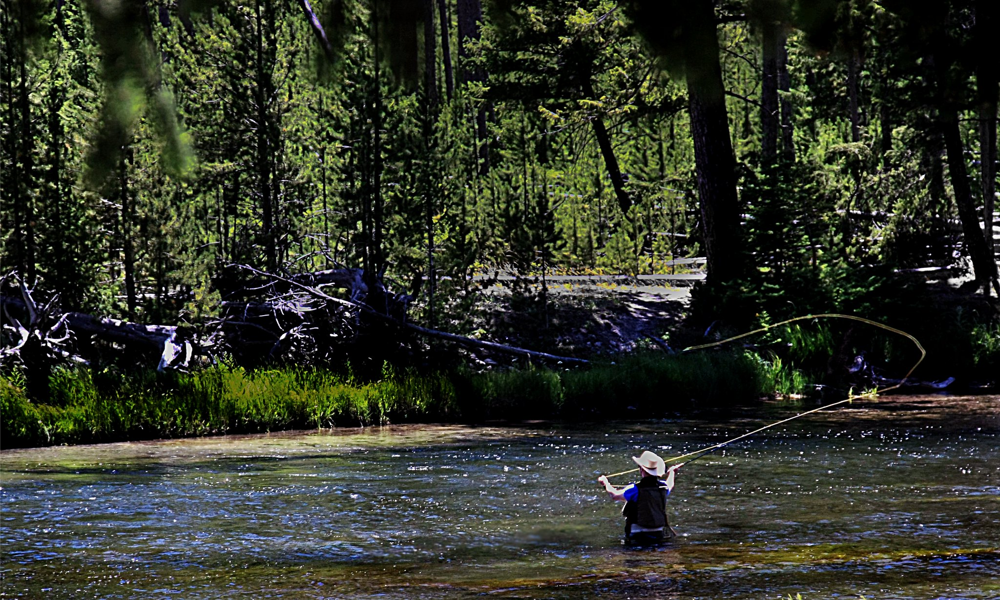 Summer Desktop Wallpaper Hd Fly Fishing In Yellowstone National Park Madison Doldrums