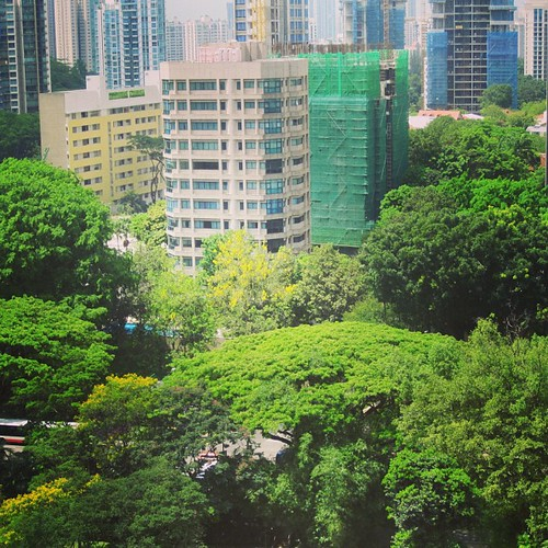 Trees over Orchard Rd #singapore by @MySoDotCom