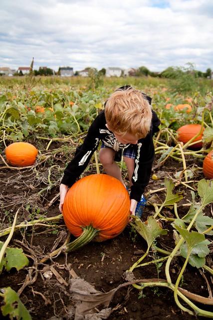getting the perfect pumpkin