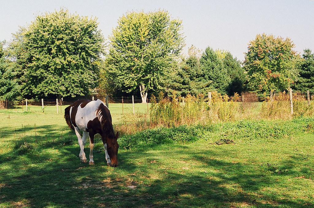 Still grazing