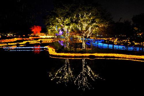 Nabana Winter Lights 033r