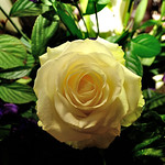 Flowers for the wedding 9