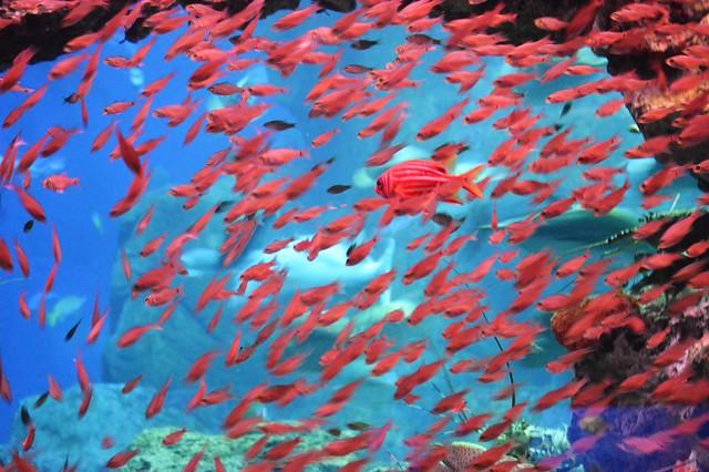 fish at the aquarium