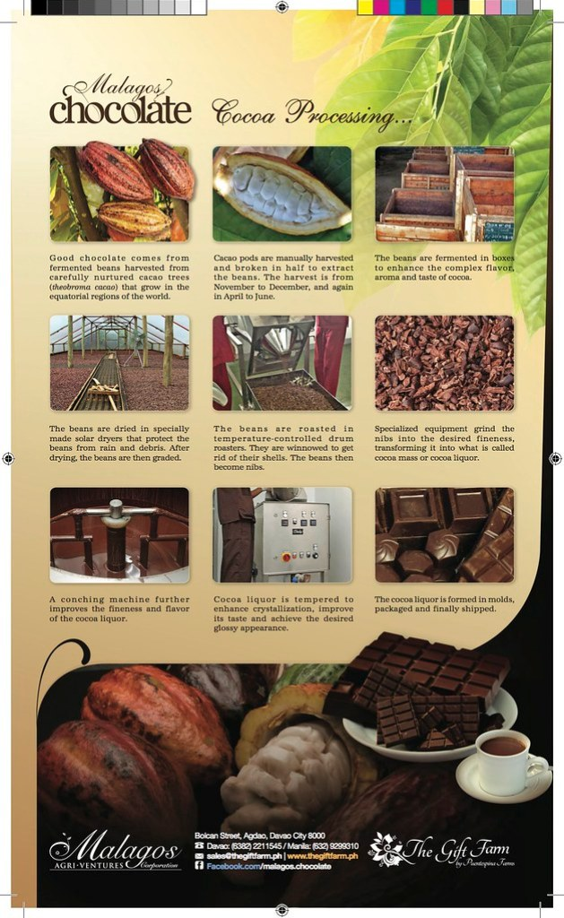 Malagos-Chocolate-Cacao-Processing