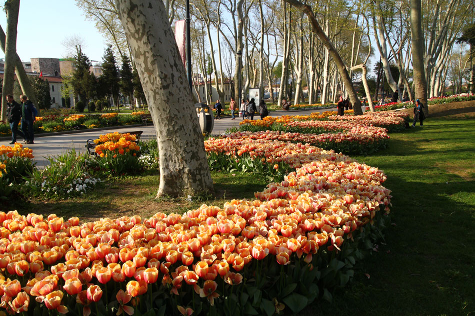 Istanbul Tulip Festival - Gulhane Park