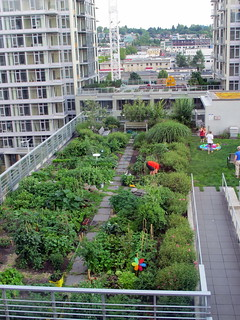 Rooftop Garden - July Jungle