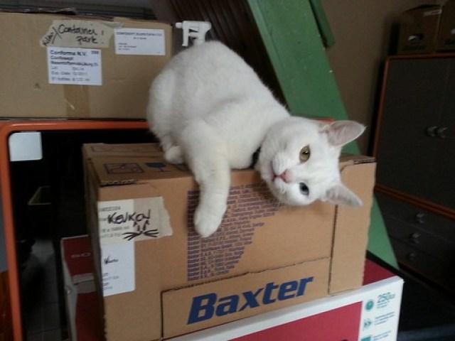 - Mijn doos is mijn. by michlr