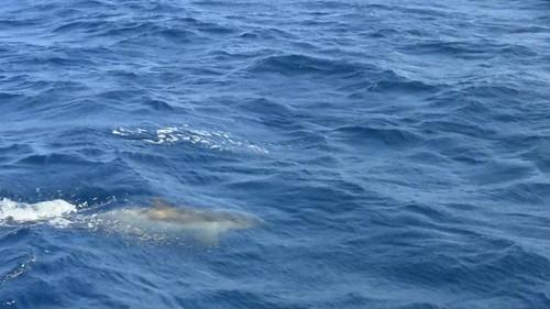 Dolphin Tarifa