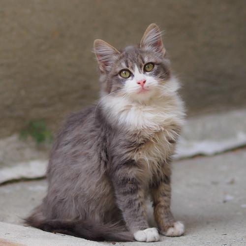 cat-150009
