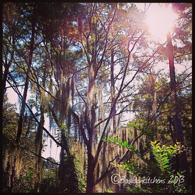 Oct 2 - light {wonderful light through the live oaks} #fmsphotoaday #light #nofilter #middletonplace #southcarolina #trees #sunshine #plantation