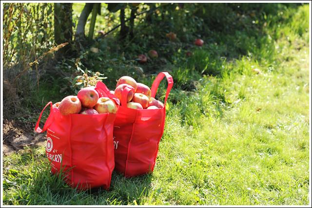 Apples 8
