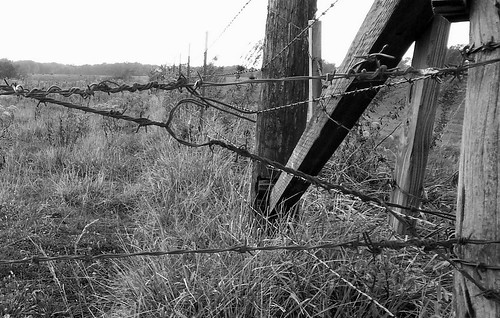 26/365 - Wire Fence