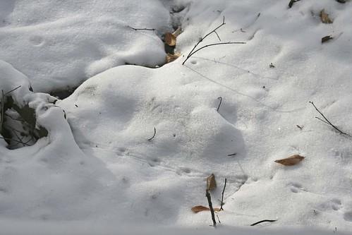 Scamper: Dawes Arboretum in Winter