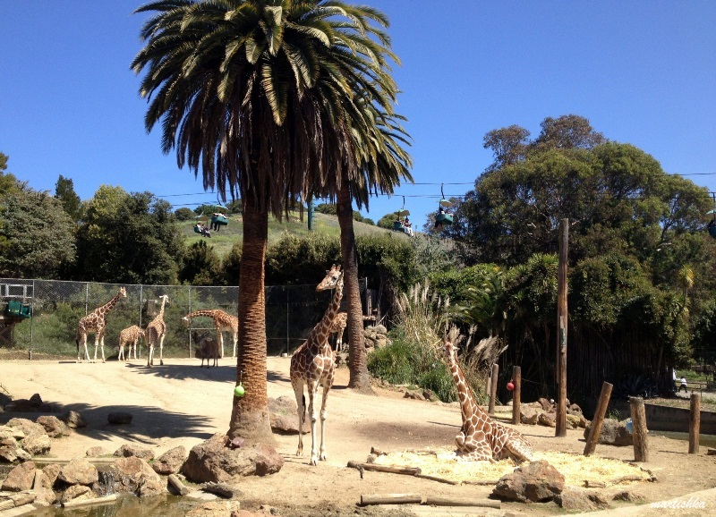 Oakland Zoo (29)