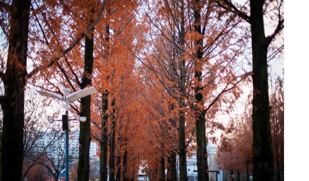 Fall Seoul State of Mind 009