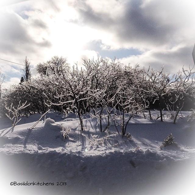 Dec 24 - Christmas Eve {gorgeous sunlight on the ice laden trees; a beautiful Christmas Eve} #photoaday #christmas #sunshine #ice #weather #winter #princeedwardcounty