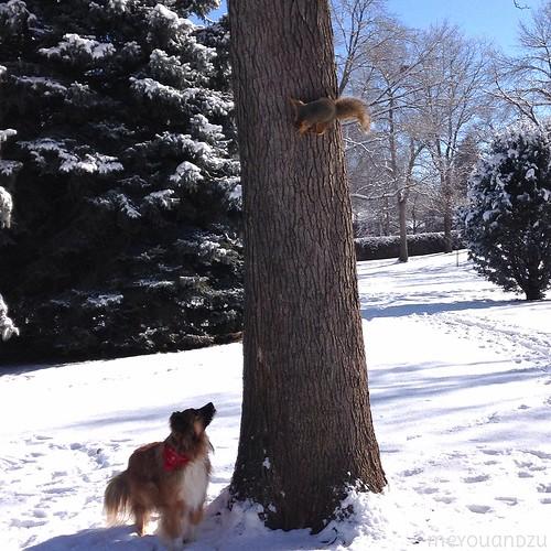 Come a little closer squirrel.