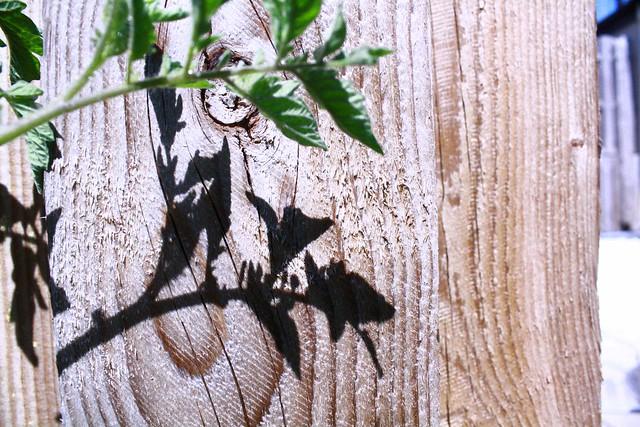 tomato shadow rough woodgrain