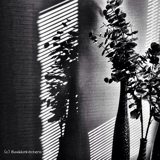 15/1/2014 - black & white {lovely shadows on the wall} #fmsphotoaday #black #white #shadiws #sunshine #stilllife