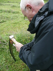 honing a scythe in the field